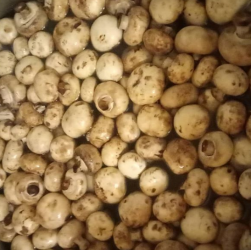 Як використовувати грунт після вирощування грибів