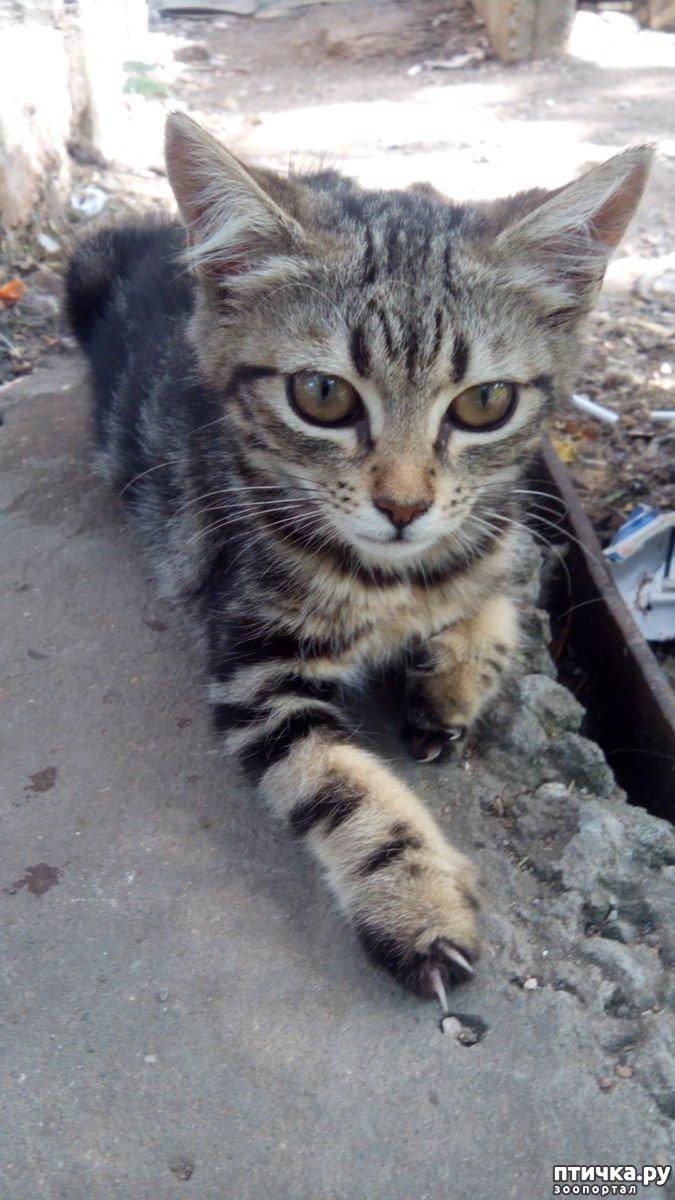 Трипалий кошеня знайшов будинок