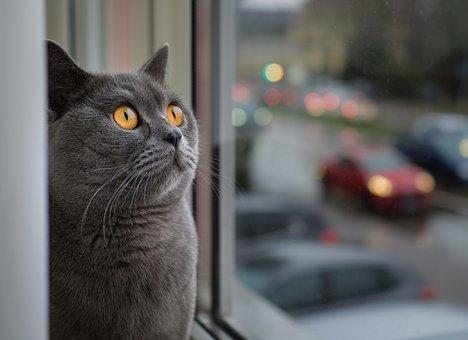 Обережно: кішка на віконці