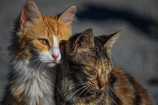 Допомога бездомним котам