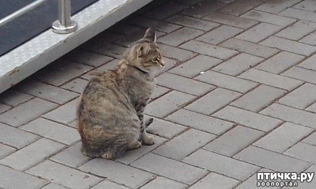 Кішка Фіфа та її щаслива історія