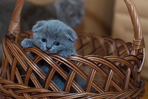 Як умовити завести кота?