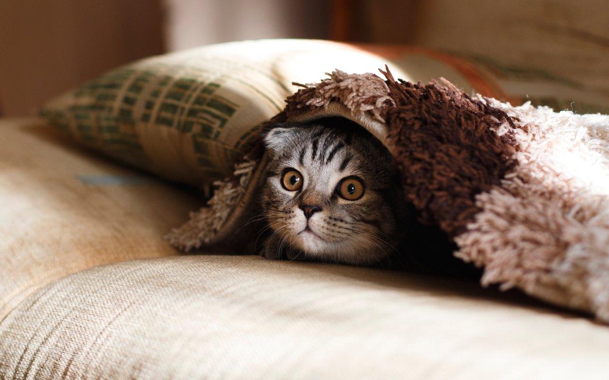 Кішок не можна залишати самих