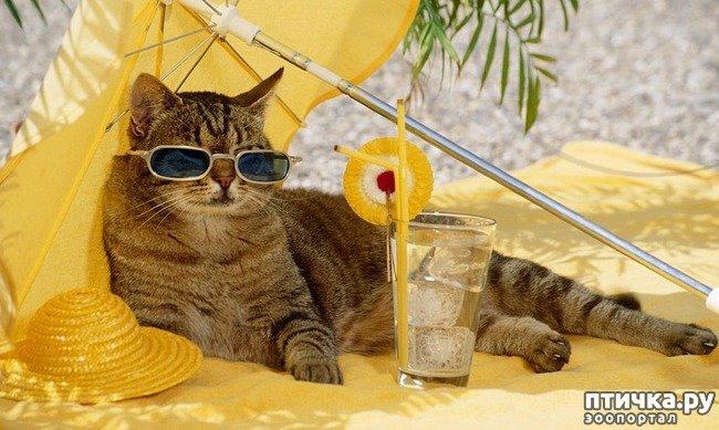 Котяче літо