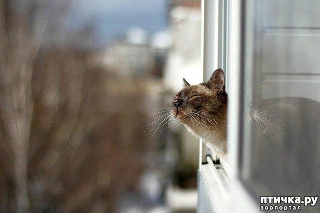 Потрібні кішці прогулянки?