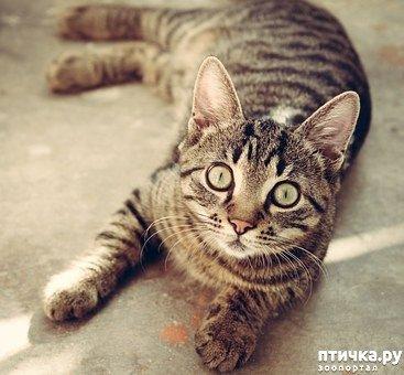 Непрості смугасті коти