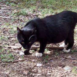 Історія кішки Лапочки