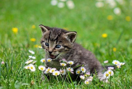П'ять порад як привчити кошеня до лотка