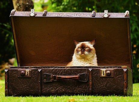 Готуємо кішку до поїздки