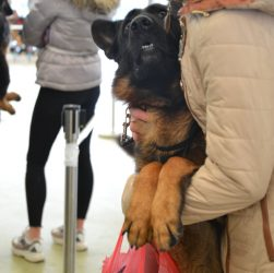 Собака - як охорона будинку та людини