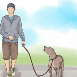 Як правильно гуляти з собакою