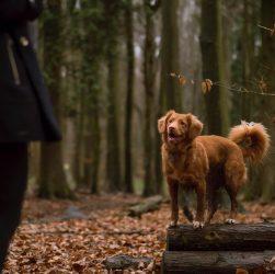 Віддам собаку на дресирування - нехай її виховають кінологи!