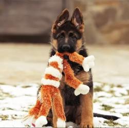 Вчимо собаку користуватися носом