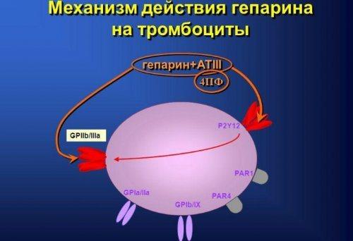 Дія гепарину на тромбоцити